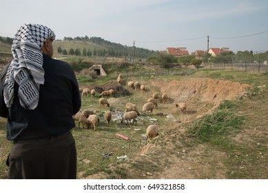 WEST BANK - JANUARY 22: A Palestinian tends his sheep near the West Bank Israeli settlement Mehola, January 22, 2014. All settlements in occupied territory are illegal under international law.
