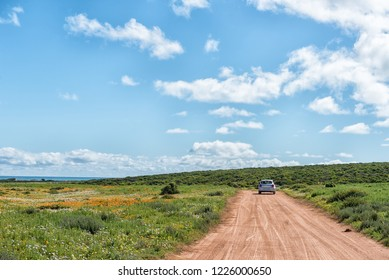 WEST COAST NATIONAL PARK, SOUTH AFRICA, AUGUST 20, 2018: Wild flowers at Postberg near Langebaan on the Atlantic Ocean coast in the Western Cape Province. A vehicle is visible