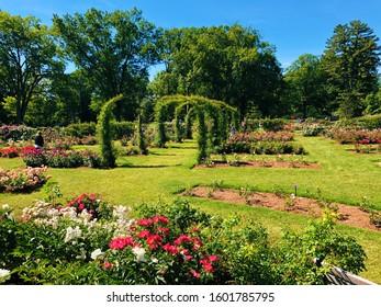 West Hartford, Connecticut,United States.June 15th ,2019.Elizabeth Park rose garden roses blooming in summer in New England West Hartford Connecticut United States.