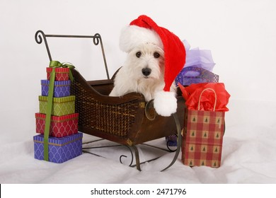 West Highland Terrier dog dressed in a Santa Claus hat and sitting in a miniature sleigh surrounded by gift bags.