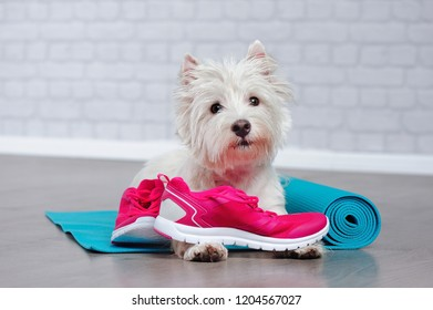 West highland terrier  hugging sneakers on yoga mat