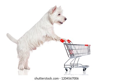 West highland terrier pushing the shopping trolley
