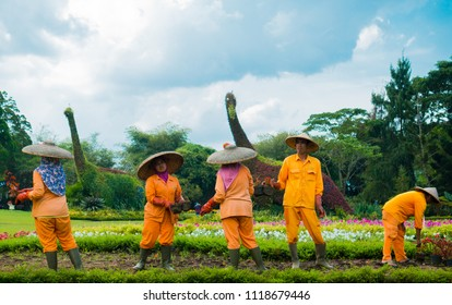 WEST JAVA, INDONESIA - AUGUST 3, 2016: The gardener works together at the tourist attraction Taman Bunga Nusantara, West Java, Indonesia.