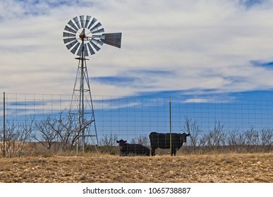 west Texas cattle ranching