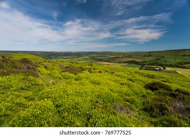 Westerdale in the North York Moors National Park in summer. Showing natural habitat, grasses and fields in the distance on a warm sunny day.