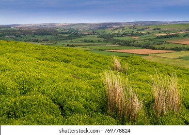 Westerdale in the North York Moors national park showing heather grasses and fields in the distance during a warm sunny day