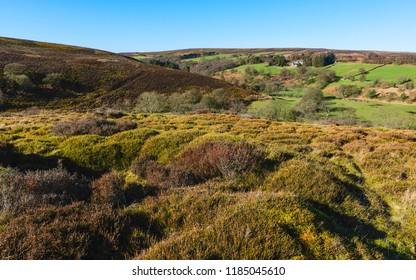 Westerdale, Yorkshire, UK. North York Moors National Park on a sunny morning with view of rolling landscape and heather, and trees near Westerdale, Yorkshire, UK.