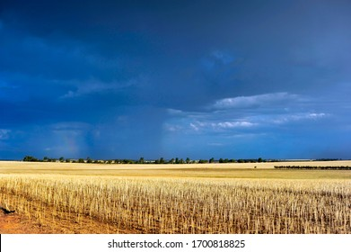 Western Australian farmers wheat paddock after harvest, hundreds of hectares of freshly harvested grain for local consumption.   Beautiful sunlit wheatbelt paddock, in rural Australia.