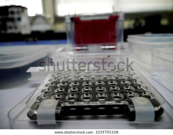 Western Blot Equipment On Lab Table Stock Photo (Edit Now) 1039705108