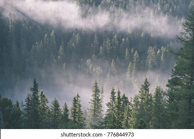 western carpathian mountain tops in  autumn covered in mist or clouds. panoramic view from a distance  in sunny day- vintage effect