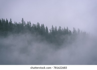 western carpathian mountain tops in  autumn covered in mist or clouds. panoramic view from a distance. autumn colored forests - vintage film look