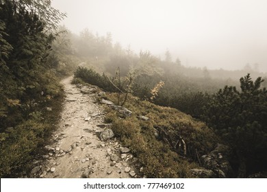 western carpathian mountain tourist trail track on rocky surface in  autumn covered in mist - soft vintage look