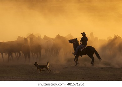 Western cowboys riding horses, roping wild horses