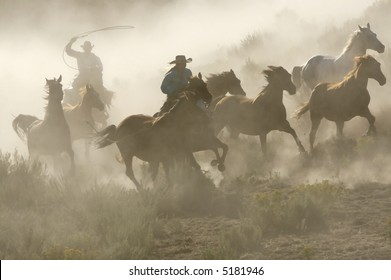 Western Glory
