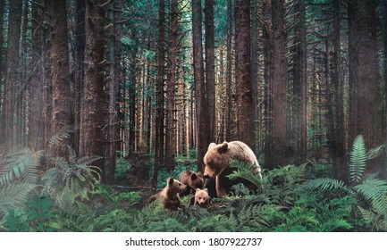 Western Hemlock trees growing close together and covered with spikemoss and bears in the Hoh Rainforest, part of Olympic National Park on the peninsula of western Washington State, United States.