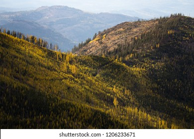 Western Larch (tamarack) trees cover the hillside in eastern was