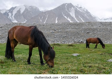 Western Mongolia mountainous landscape. Two horses grazing at alpine meadow. Altai Tavan Bogd National Park, Bayan-Ulgii Province, Mongolia.