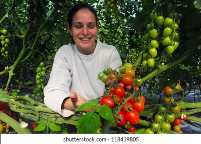 WESTERN NEGEV-DECEMBER 06:An Israeli woman farmer with a hand full of cherry tomatoes in his farm on December 06 2009 at the Western Negev, Israel.The legendary cherry tomato was developed in Israel.