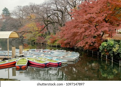 In the western part of Tokyo,Inokashira park and central lake is the site of many activities.