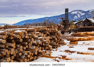 Western Red Cedar logs staked in a pile, at a lumber mill, in snow during winter in British Columbia Canada, waiting to be processed to usable lumber products