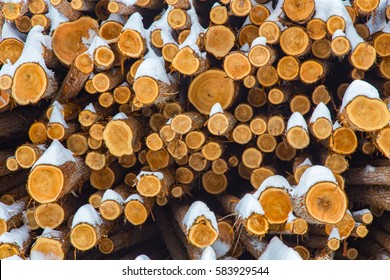 Western Red Cedar (Thuja plicata) logs, Characteristic reddish heartwood, piled for winter processing at a lumber yard mill, under snow in British Columbia Canada