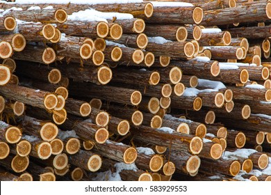 Western Red Cedar (Thuja plicata) logs,distinctive Characteristic red heartwood, piled for winter processing at a lumber yard mill, under snow in British Columbia Canada