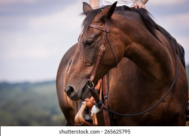 western ride style, horse with rider, blue background, horse listen to the rider, horse riding