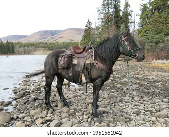 Western trail riding horse by river ready to ride