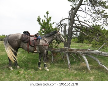 Western trail riding horse ready to ride