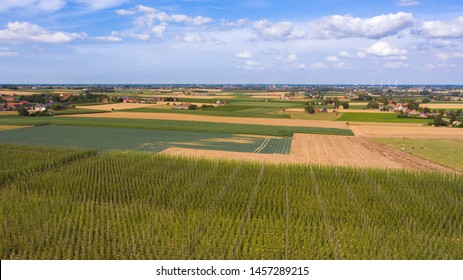Westhoek countryside landscape around Proven near Poperinge, Flanders, Belgium. Large green hops field in foreground and city of Poperinge visible in background. Agriculture fields in West Flanders.