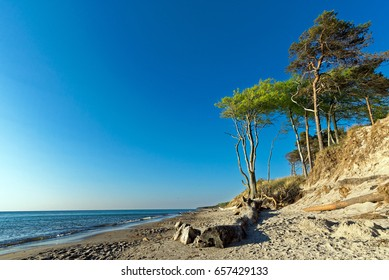 Weststrand Trees 1