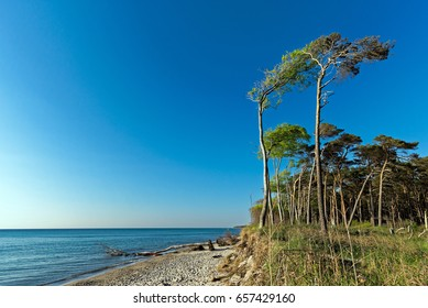 Weststrand Trees 2