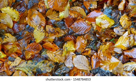 Wet Autum leaves  on the ground