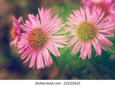 Wet autumn flowers