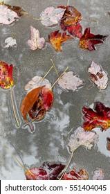 Wet autumn leaves.