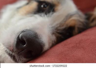 a wet black dog nose