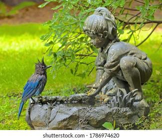 wet Blue Jay at a birdbath