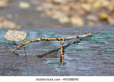 Wet branch on the bench.