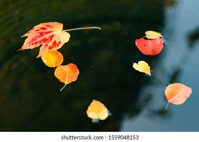 wet bright autumn leaves against a dark background
