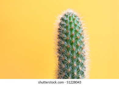 Wet cactus on yellow background
