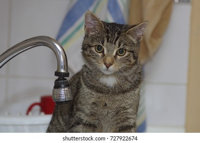 Wet cat after drinking water from faucet