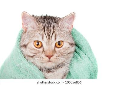 wet cat in green towel