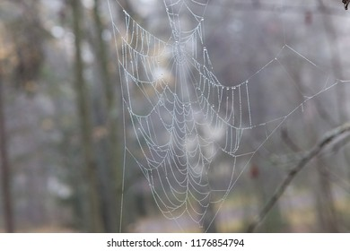 Wet cobweb in tree branch in forest