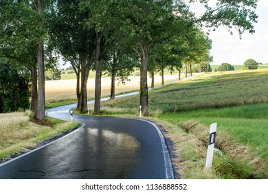 Wet country road with trees