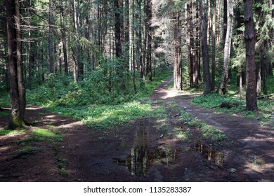 Wet dirt road in the forest