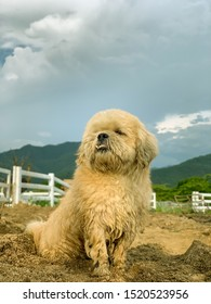 wet and dirty dog in farm , Overbite dog
