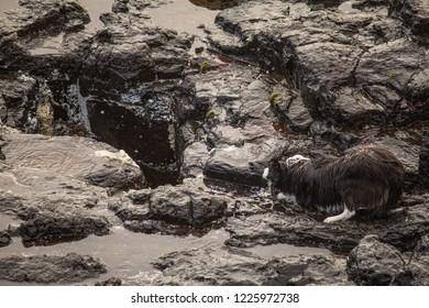 Wet dog awaiting the blowhole
