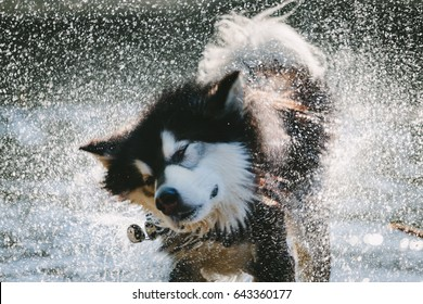 Wet Dog Shakes off after a swim