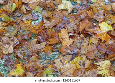 Wet fall foliage texture nature background