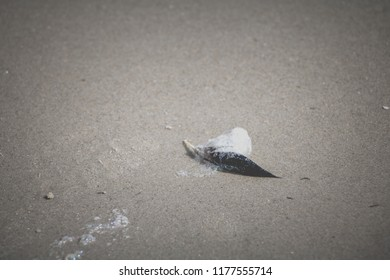Wet Feather covered with Foam at the Sandy Beach